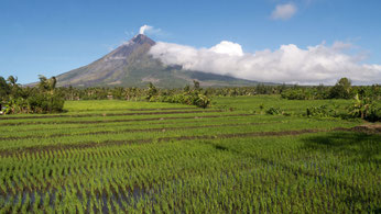 Volcano Mayon and rice farming