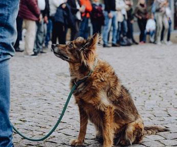 Ziemlich gegen den Strich kämmt das Comedy-Festival in Bad Dürkheim das Zeitgeschehen. Fotos: SWR 3