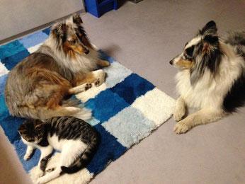 Grigri Katze Zuhause gefunden