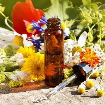 Bild Bachblüten-Therapie