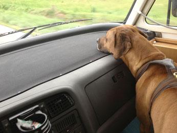 Der Beifahrer ist auf seinem Beobachtungsposten, (keine Sorge, ist angeschnallt)