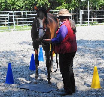 Clickertraining: Für eine bessere Balance deines Pferdes
