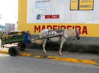 nur Pferde-Fuhrwerke durften in die Altstadt
