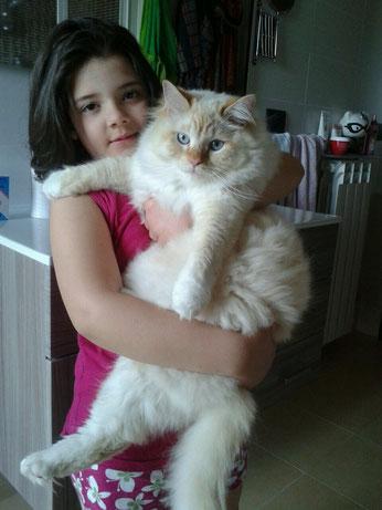gatto siberiano,gatti siberiani, allevamento, gatti, cuccioli, siberiani, siberiano,
