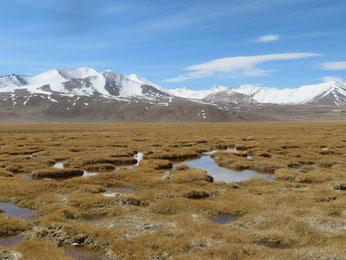 Die Moorlandschaften geben dem Pamir seine typischen Farben