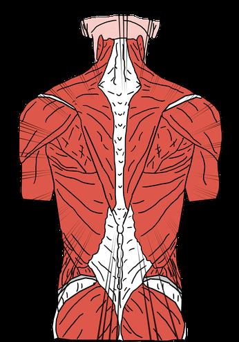 Rückenschmerzen, HeilRaum Corinna Stübiger, Psychosomatik, Organsprache