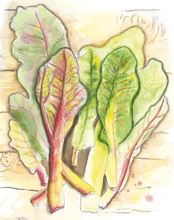 Illustration mehrerer bunter Mangoldblätter wie im Kinderbuch Die Kusinusis im Gemüsebeet