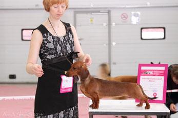 Almaznyi Laretz ALLEGRA - BOB Puppy