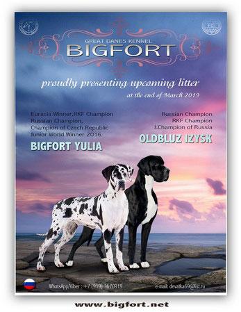 Bigfort M 2019