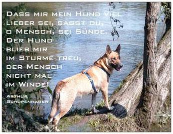TESSA e.V., Tierschutz