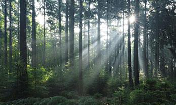 Produceer animatie video's klimaatneutraal om de bossen te redden