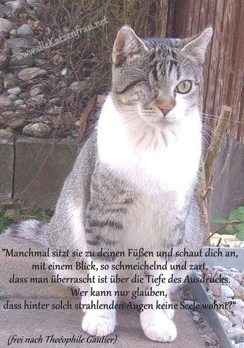 Mobile Katzenbetreuung - Catsitting im Saarland - Wadern, St. Wendel, Nonnweiler, Tholey