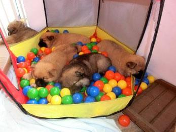 Erwachsener Hund, Tierheim/Tierschutz-Hund oder Welpe vom Züchter? Ehrliche Beratung, was man beachten sollte ...