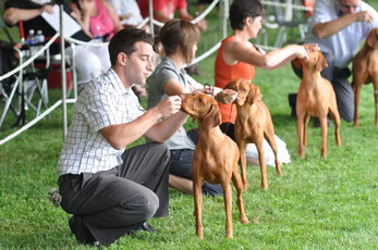 Conformation - CH Lienroc Glowing Heart Vesper CGN at Vizsla Canada Specialty