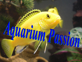 aquarium passion