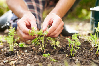 The least physical way  to grow fruit, vegetables and flowers is to grow from seed, sown in the place you want them to grow
