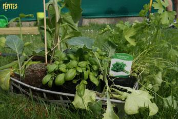 Pépites vient tous les mois avec les semences et les plants