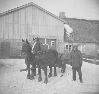 Bevor es 1962 einen Schlepper gab, hat mein Vater Hans Voigt die Arbeiten mit den beiden Kaltblutpferden verrichtet. Dokumente und Bemerkungen von Hans Heinrich Voigt