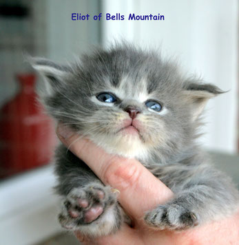 Eliot 3 Wochen