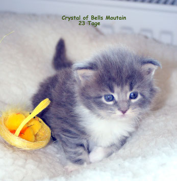 Crystal  mit 23 Tagen