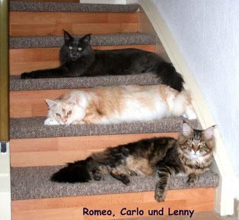 Treppenbelagerung