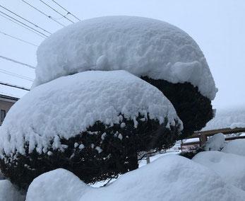 松の木に降り積もった雪