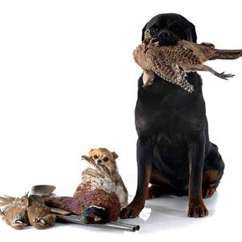 Zwei Hunde mit erbeuteten Vögeln auf der Jagd