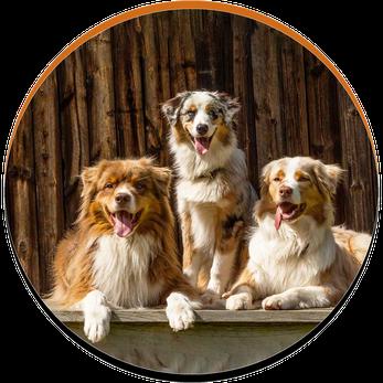 Beratung vor dem Kauf - Bild zeigt drei Hunde