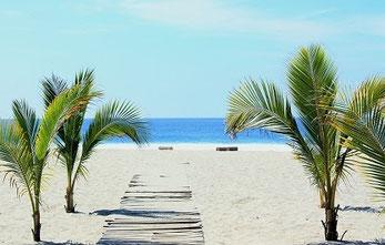 karibischer Strand mit Palmen