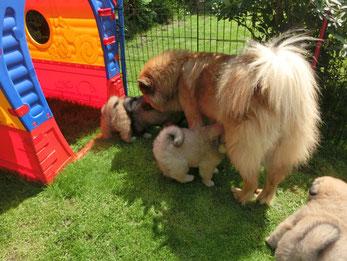 Mama Bia und ihre Kinder ... alle mögen den SCHATTEN ;-)))