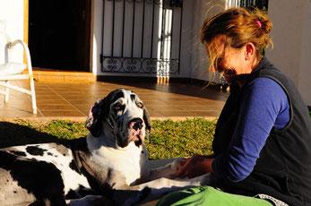 Sinnvoll ist Chiropraxis bei  Doggen , da sie so  schnell wachsen .