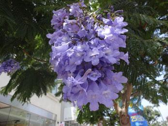 咲いている花を見るのは初めて。