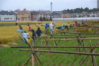 雨の中の稲刈り風景