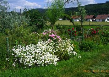 Sommergarten von Kay Großwendt, Foto: Niemann-Khaliefi