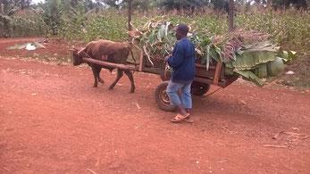 Ein häufiges Transportmittel...