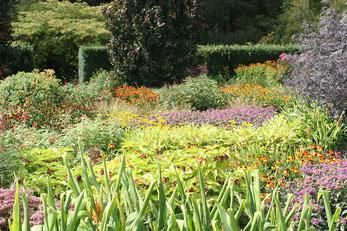 Üppig bewachsenes Blumenbeet im Rosemoor Garden