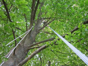 Klettergurt Baum : Baumklettern himmelwärts