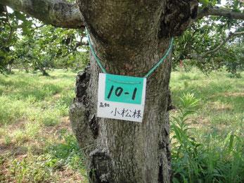 柿狩りとオーナ制度