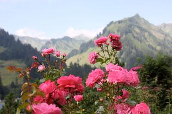 Direkter Blick von unserem Garten in die Berge!