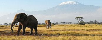 Kenya Safari. Amboseli National Park. In the background the Mount Kilimanjaro