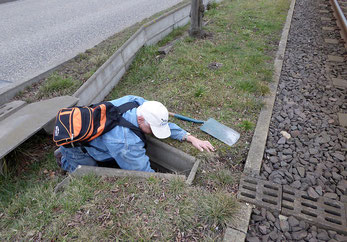 Der NABU kümmert sich auch darum, dass die Amphibientunnel funktionsfähig sind. Dazu werden sie von Müll und wuchernden Pflanzen befreit.