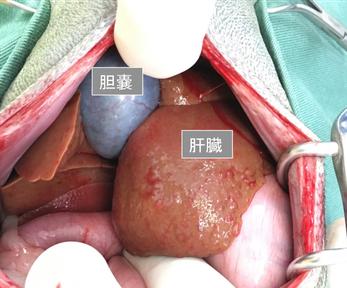 犬の胆嚢粘液嚢腫と肝硬変 - 立...