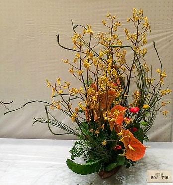 氏家芳翠 花材:カンガルーポー、石化えにしだ     アンスリューム、子宝草(多肉植物)、ポリシャス