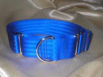 Martingale, Halsband, 4cm, Gurtband königsblau
