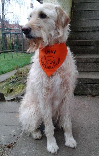 Hundehalstuch Schulhund, Behinderten Begleithund