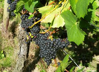 Unsere Rotweine, Weinhandel Troisdorf