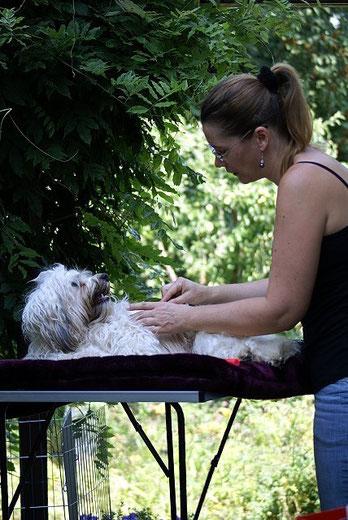 Open-air-Kämm-Aktion - Fiona wird gepflegt