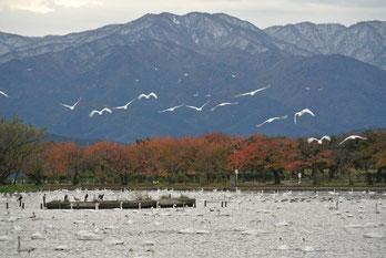 12日(火)~13日(水)に降った雪がまだ少し残る五頭山。13日早朝には瓢湖の湖畔にも初雪が降りました。