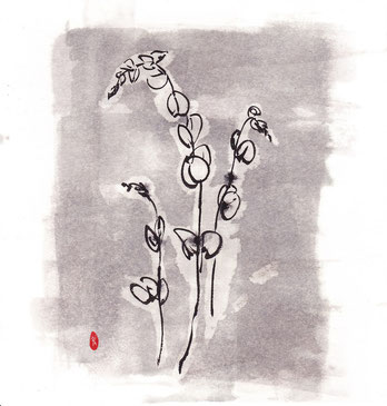 葉-ユーカリ丸葉-