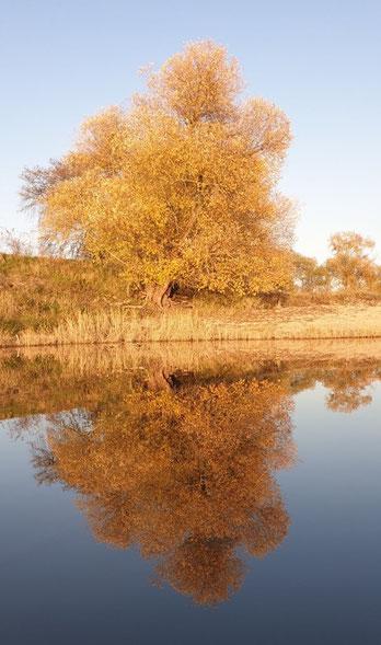 Goldener November